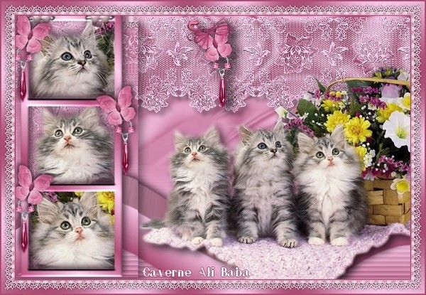 Chatons Tendresse